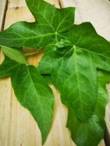 lessive feuilles de lierre